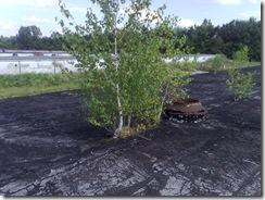 Izolatii bituminoase strapunse de plantele de acoperis